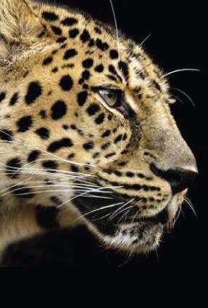 leopard-Shop